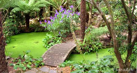 Upper Ponds